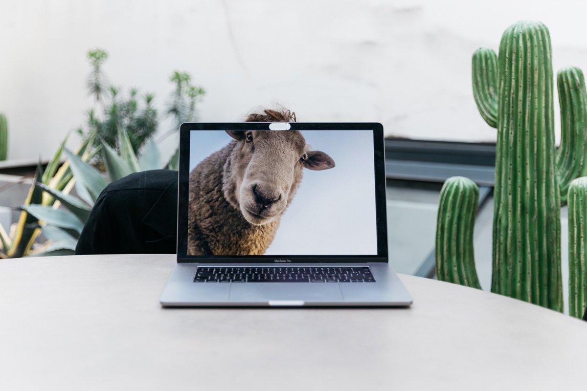 Quel animal êtes-vous au travail ? 9 profils décryptés