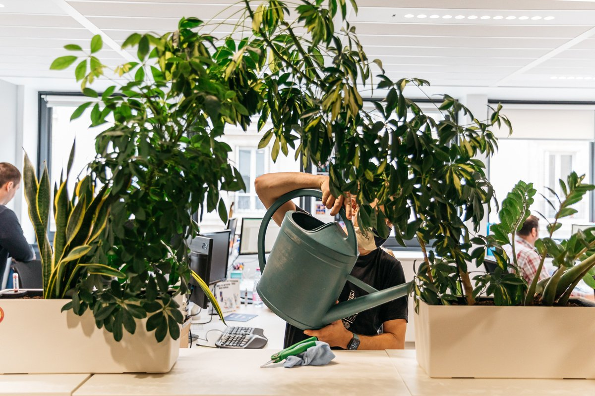 What are green jobs and how to get one?