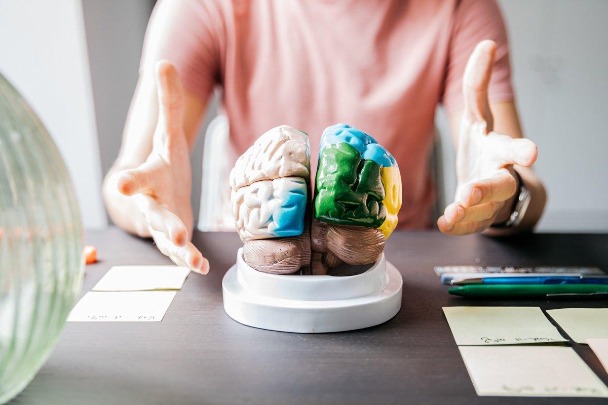 Processus décisionnel : peut-on se fier à son cerveau ?