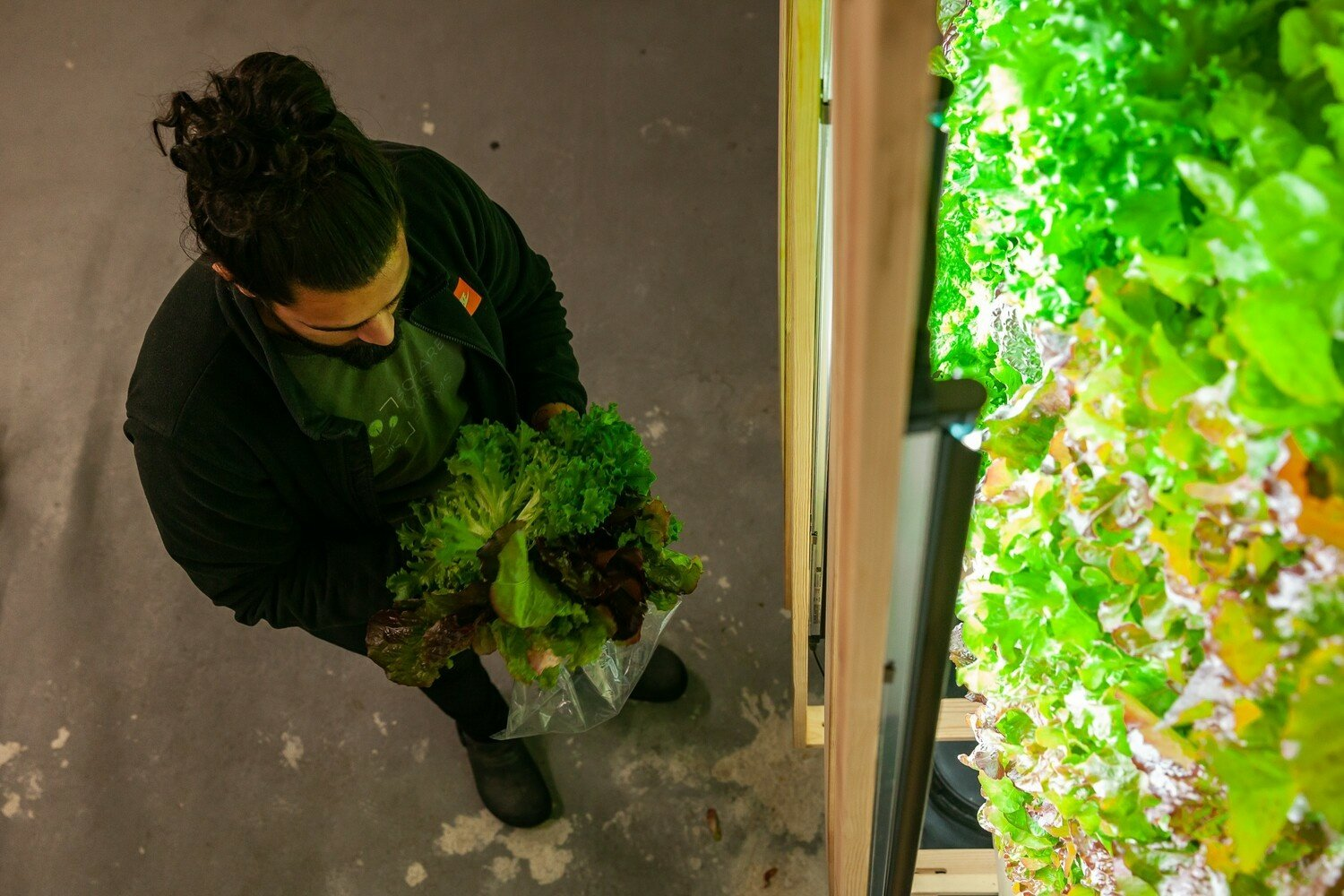 The only way is up: farmers who grow crops without soil or sun